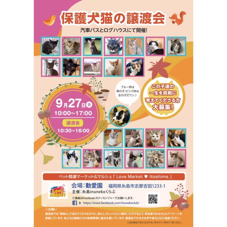 明日の譲渡会で、地域猫カレンダー 販売します。_d0073743_16554039.jpg