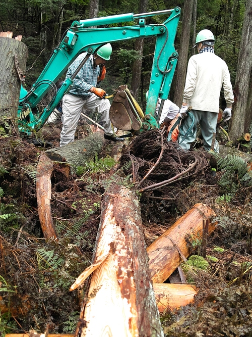 タマゴタケと百日紅・・・くつきの森、未来の森づくりと薪ネット例会_d0005250_1833512.jpg
