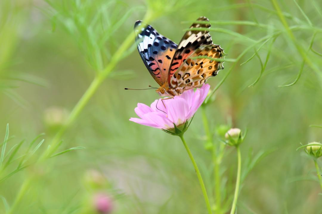 トンボや蝶と植物_e0403850_20210152.jpg