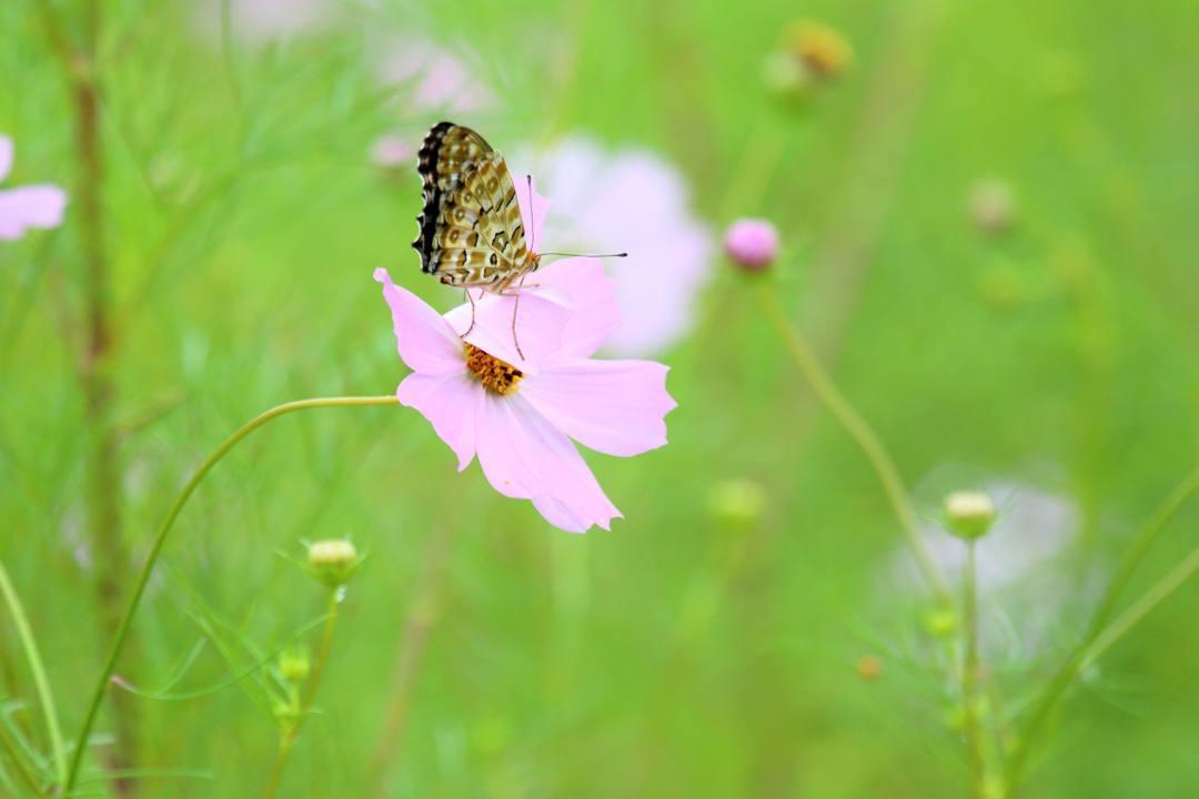 トンボや蝶と植物_e0403850_20210531.jpg