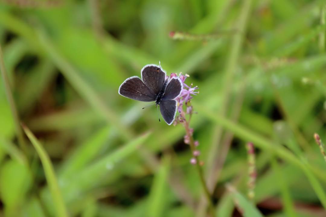 トンボや蝶と植物_e0403850_20210902.jpg