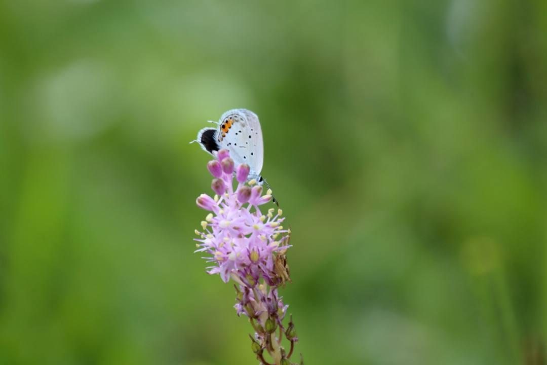 トンボや蝶と植物_e0403850_20211414.jpg