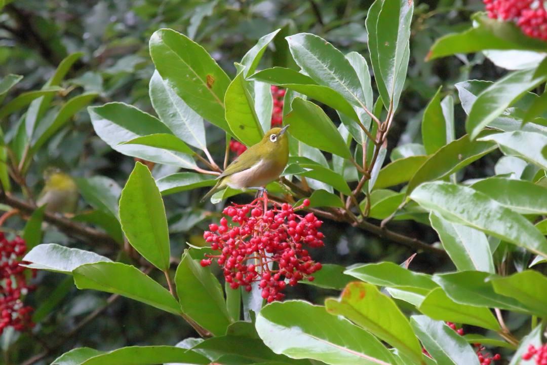 トンボや蝶と植物_e0403850_20212113.jpg