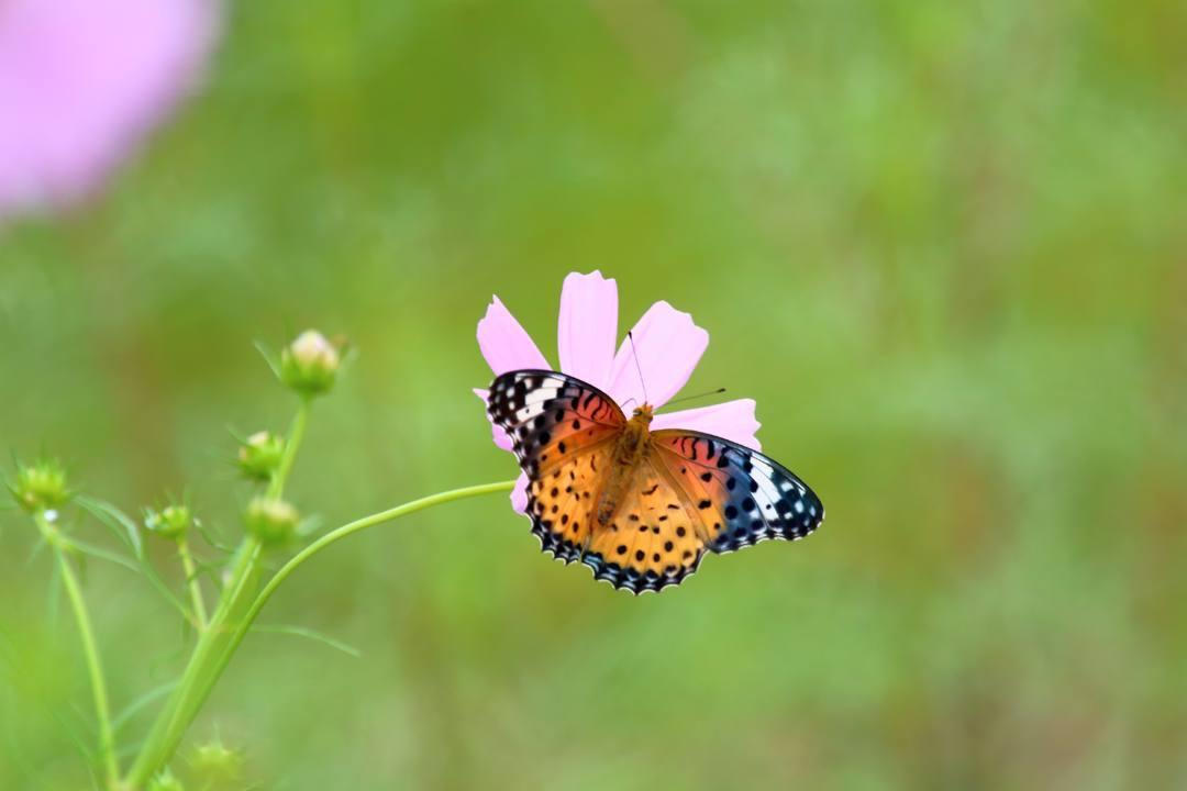 トンボや蝶と植物_e0403850_21062576.jpg