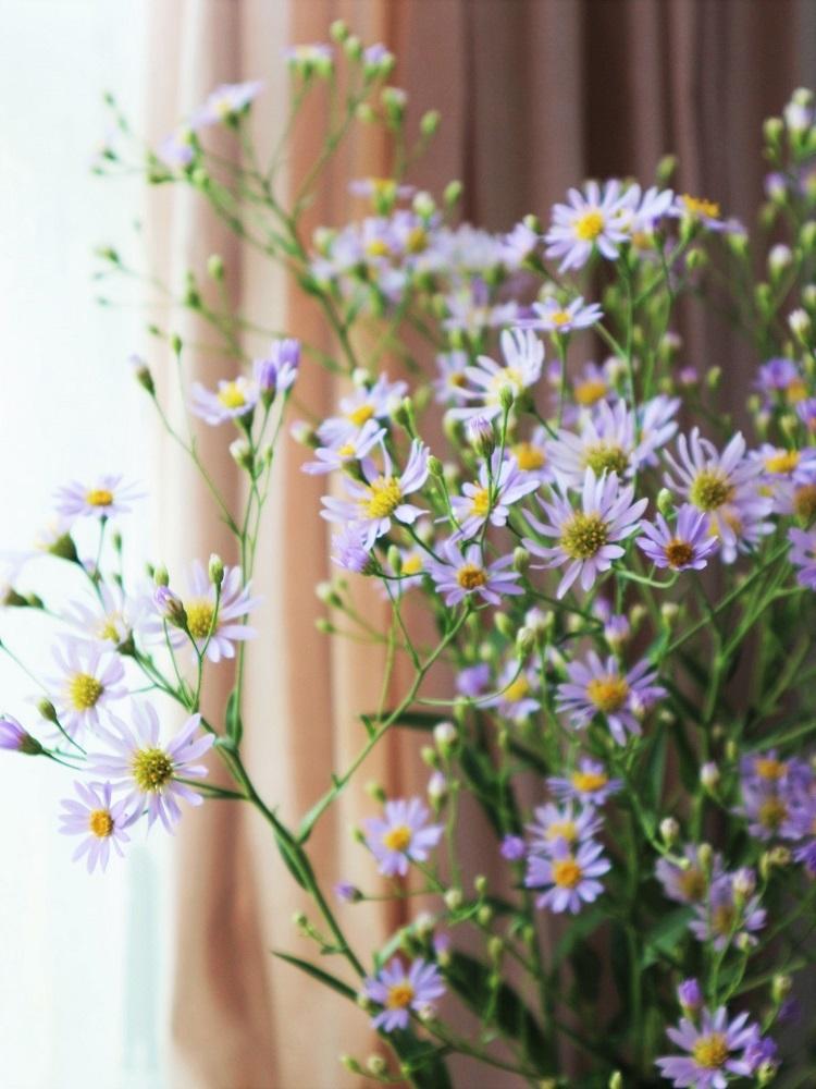 長月の花と果実_d0159066_20042327.jpg