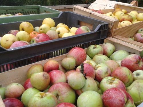 りんごジュース作り_d0340774_23480521.jpg