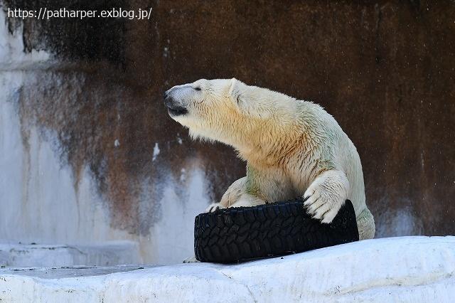 2020年8月 天王寺動物園 その4_a0052986_7313986.jpg