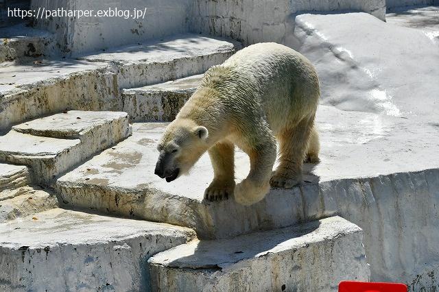 2020年8月 天王寺動物園 その4_a0052986_7323014.jpg