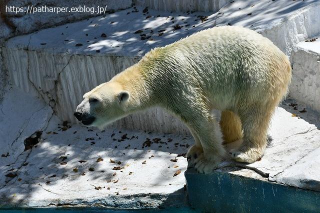 2020年8月 天王寺動物園 その4_a0052986_7324235.jpg