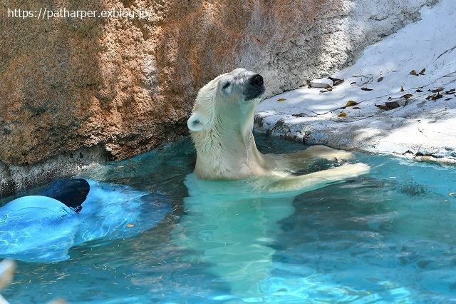 2020年8月 天王寺動物園 その4_a0052986_733058.jpg
