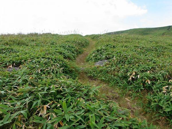 長野県ビーナスラインを巡る山旅 三峰山 SAOTA#JA/NN-080_f0073587_21433285.jpg