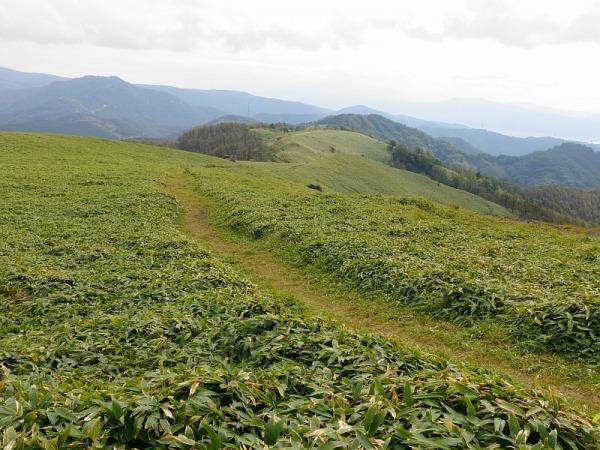 長野県ビーナスラインを巡る山旅 三峰山 SAOTA#JA/NN-080_f0073587_21443299.jpg