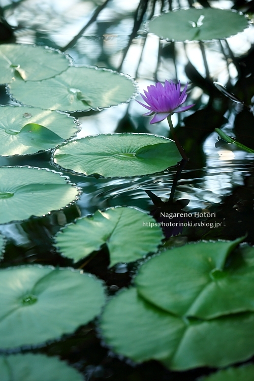 花よりも_b0166896_21164740.jpg