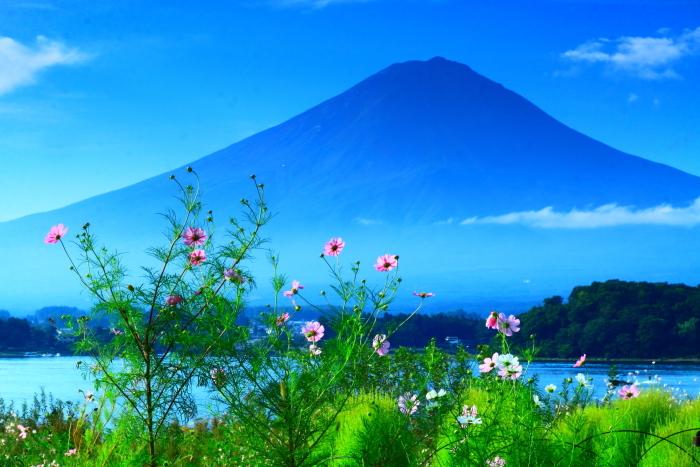 令和2年9月の富士(10) 大石公園花街道の富士_e0344396_11450949.jpg