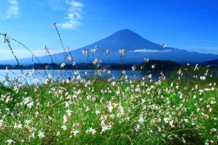 令和2年9月の富士(10) 大石公園花街道の富士_e0344396_11450998.jpg