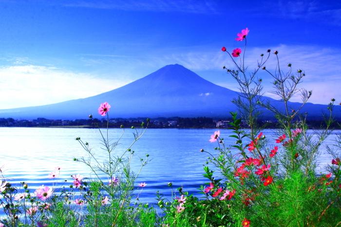 令和2年9月の富士(11) 河口湖畔コスモスと富士_e0344396_18415168.jpg