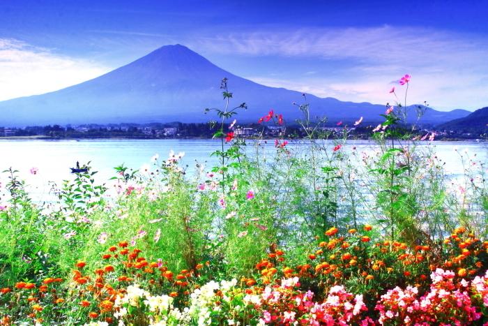 令和2年9月の富士(11) 河口湖畔コスモスと富士_e0344396_18415249.jpg