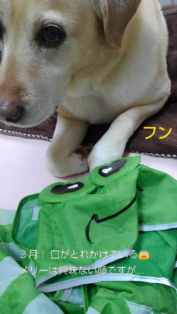 メリーのカッパのカエルの口がぁ~!_b0339522_16063359.jpg