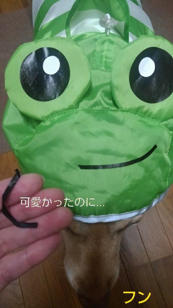 メリーのカッパのカエルの口がぁ~!_b0339522_16070363.jpg