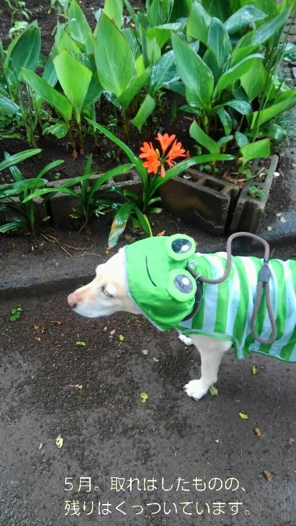 メリーのカッパのカエルの口がぁ~!_b0339522_16072353.jpg