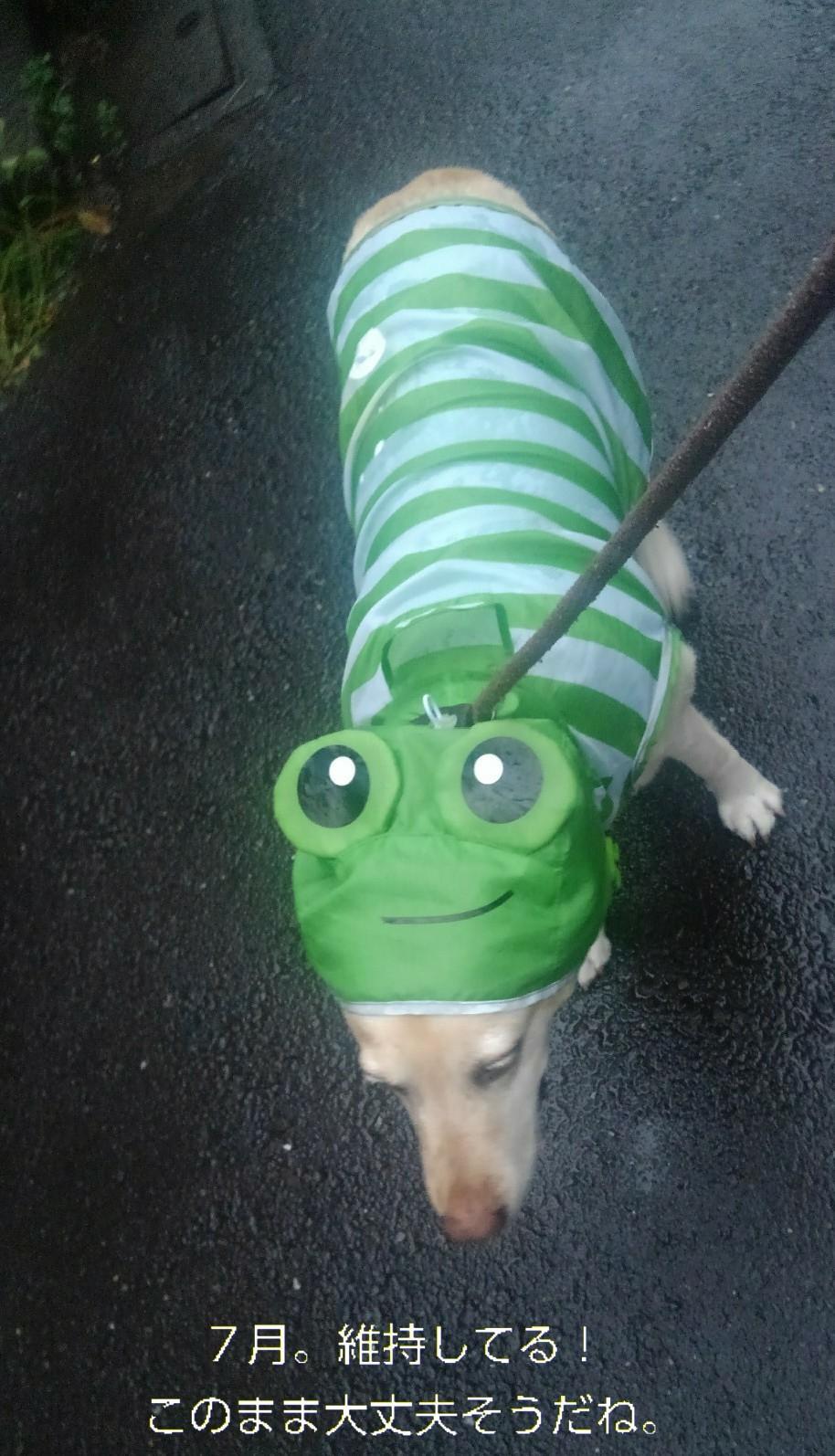 メリーのカッパのカエルの口がぁ~!_b0339522_16080169.jpg