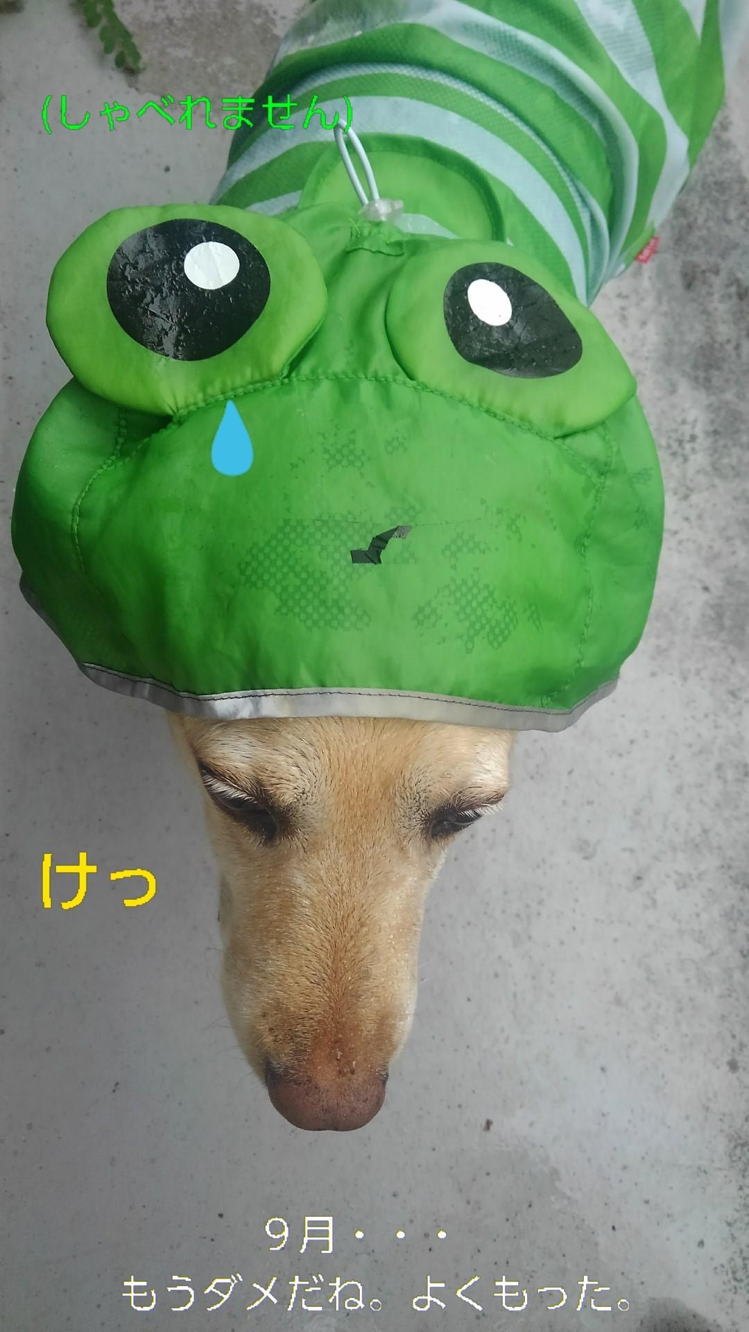メリーのカッパのカエルの口がぁ~!_b0339522_16085179.jpg
