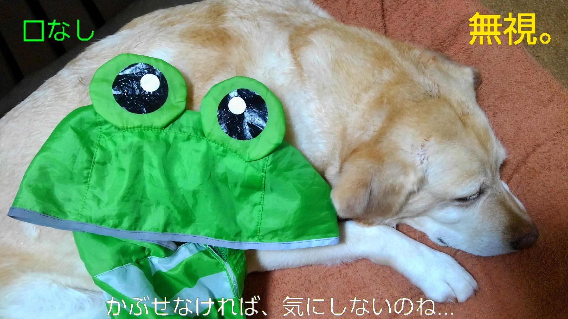 メリーのカッパのカエルの口がぁ~!_b0339522_21223712.jpg