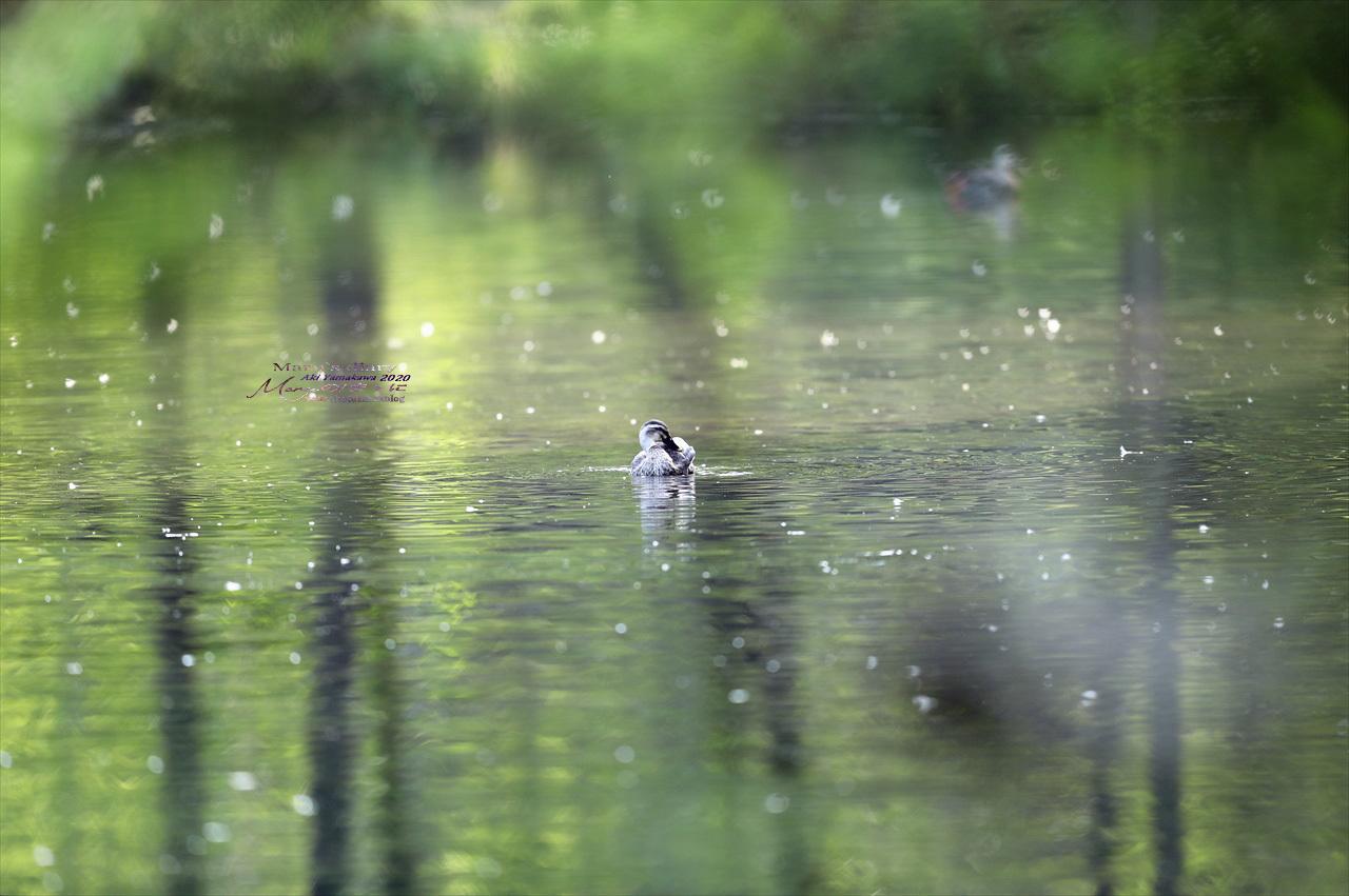 ままに/9月の散策 智光山公園 曼珠沙華 紫苑 他_d0342426_21355829.jpg