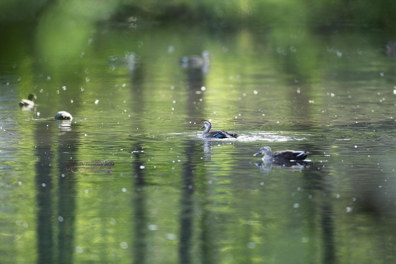 ままに/9月の散策 智光山公園 曼珠沙華 紫苑 他_d0342426_21355870.jpg