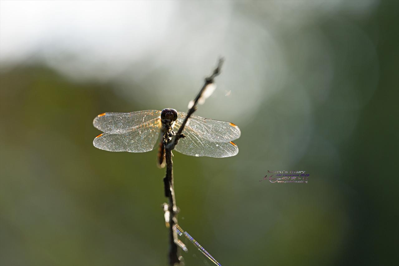 ままに/9月の散策 智光山公園 曼珠沙華 紫苑 他_d0342426_21393353.jpg