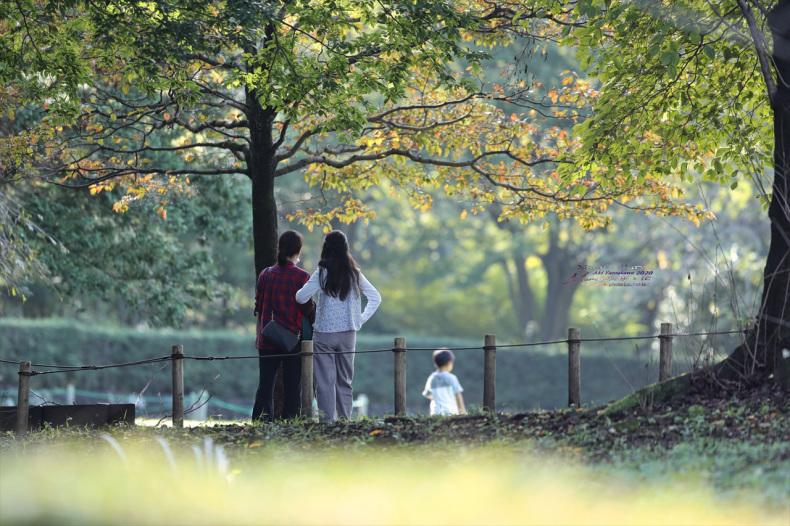 ままに/9月の散策 智光山公園 曼珠沙華 紫苑 他_d0342426_21424215.jpg