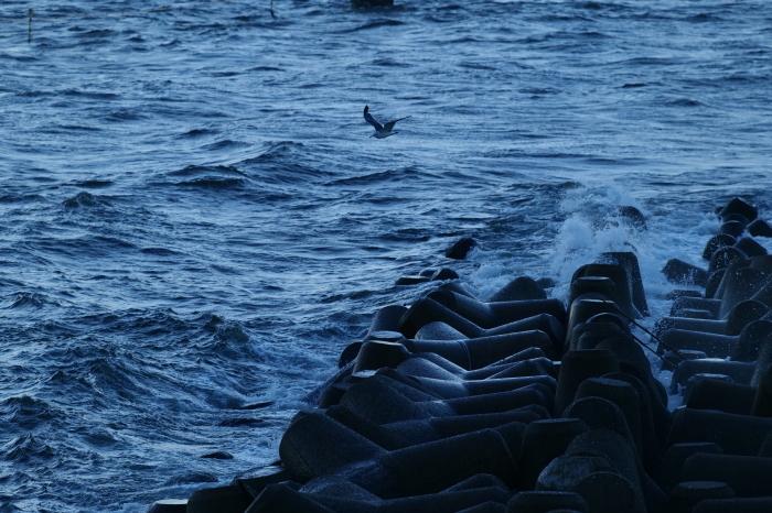 海ほたる2  LUMIX S5_f0050534_15113335.jpg