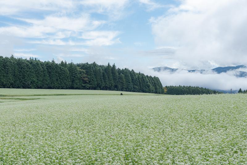 雲海と蕎麦畑_f0158043_20381246.jpg