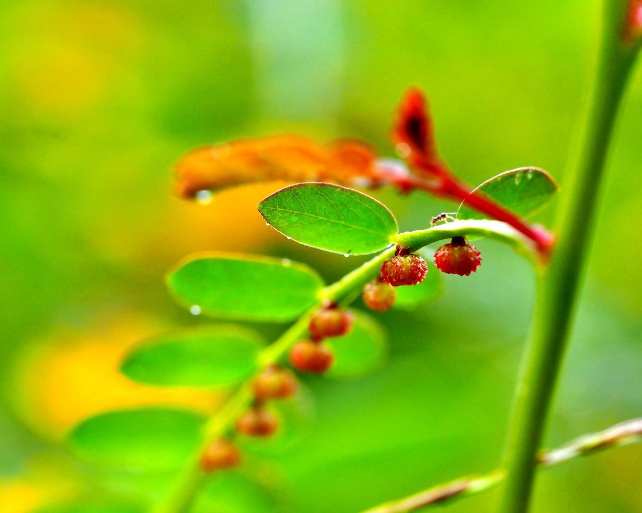 群馬の森で秋色 心配な返り咲きも_c0305565_17312667.jpg