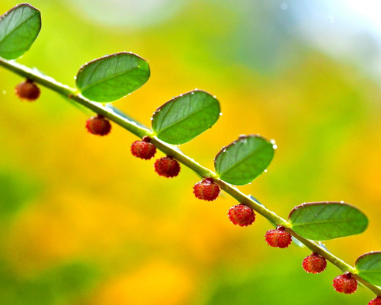 群馬の森で秋色 心配な返り咲きも_c0305565_17315054.jpg
