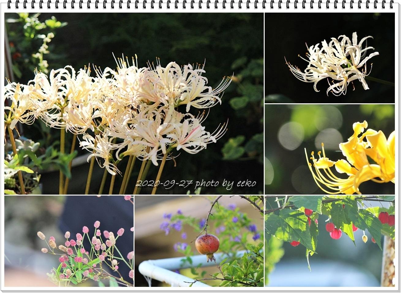 庭の花_f0104569_19384342.jpg