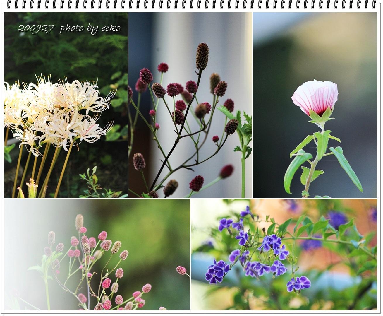 庭の花_f0104569_19385691.jpg