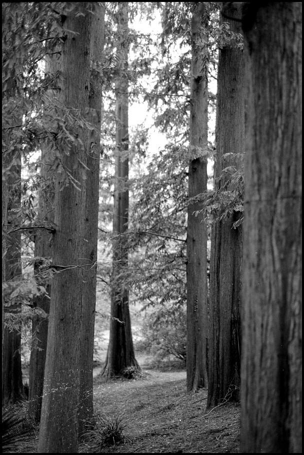 小石川植物園 -17_b0340572_23065640.jpg
