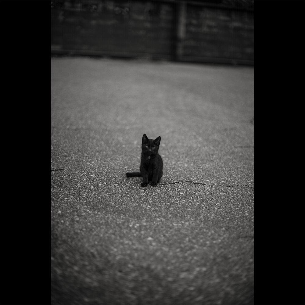 黒猫の名はクロサワさん_c0118173_19034005.jpg