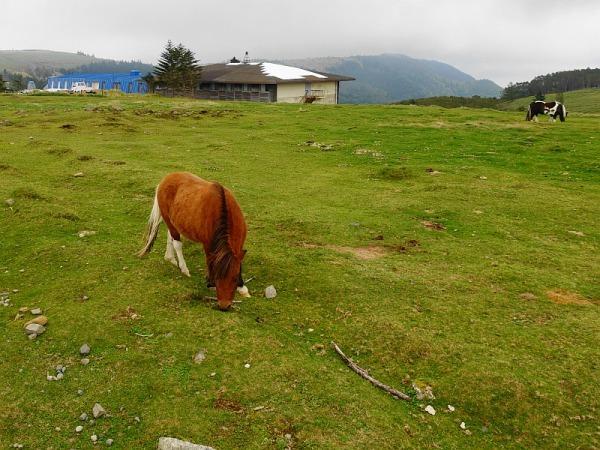 長野県ビーナスラインを巡る山旅 美ヶ原 SOTA#JA/NN-067_f0073587_01002347.jpg