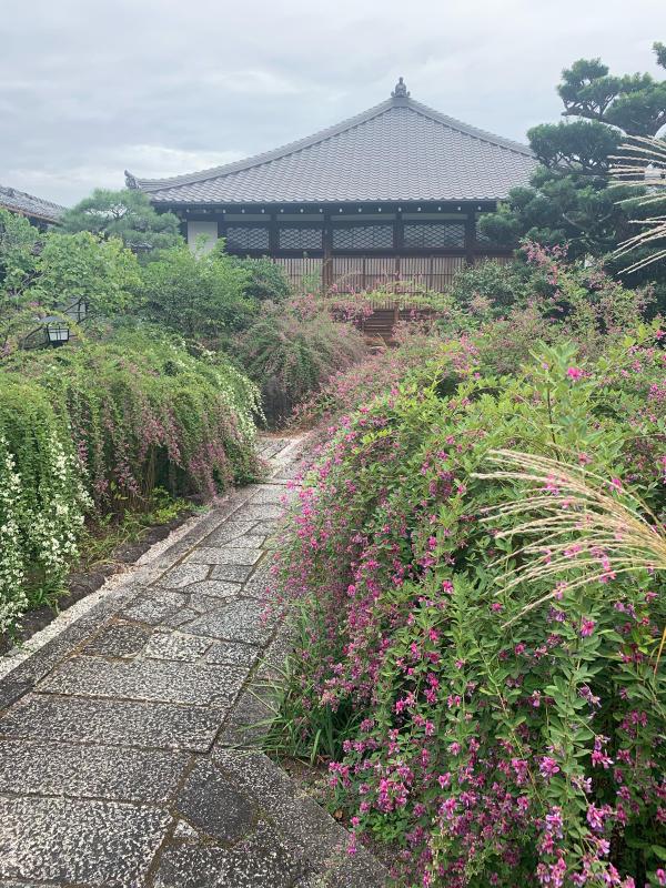 萩の寺 _b0408892_08051911.jpg