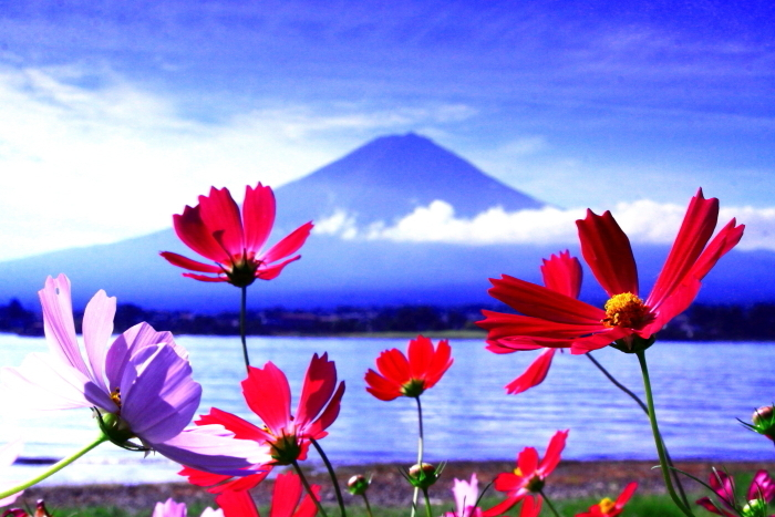 令和2年9月の富士(12) 河口湖長崎公園の富士_e0344396_17253488.jpg