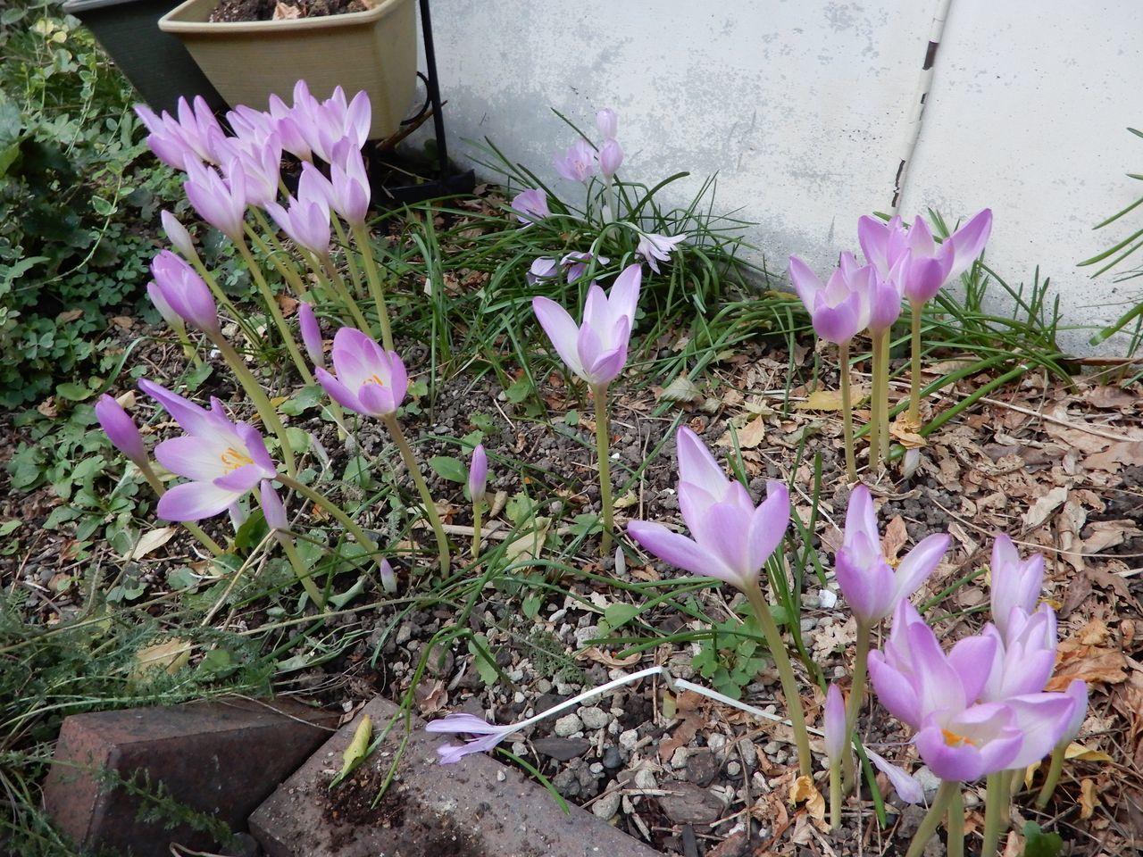季節は仲秋・秋分・むしかくれてとをふさぐ_c0025115_20554105.jpg