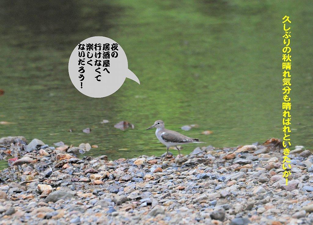 日本晴れ!_b0404848_16283560.jpg
