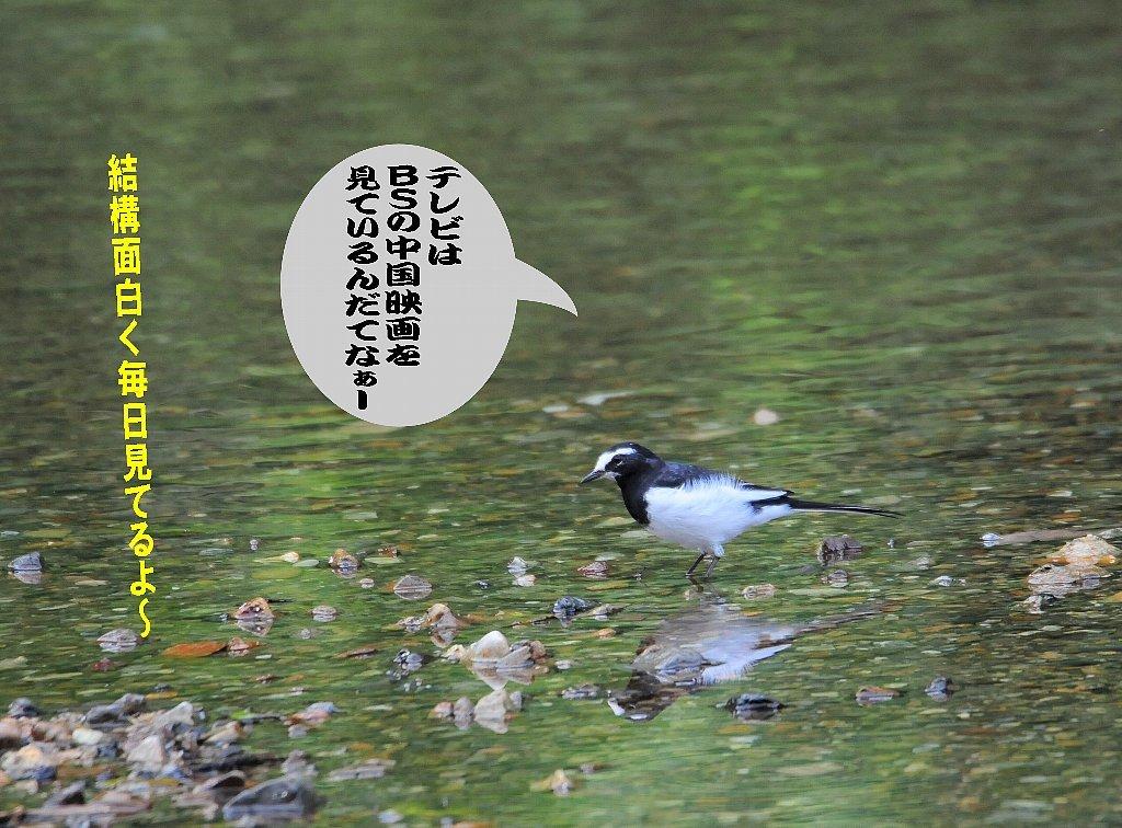 日本晴れ!_b0404848_16284259.jpg