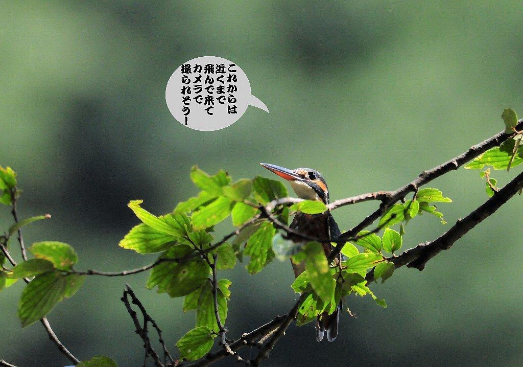 日本晴れ!_b0404848_16290279.jpg
