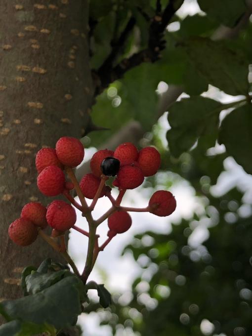 秋です_b0093660_18503859.jpg