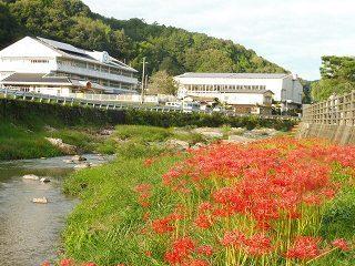 矢掛町のヒガンバナ_e0046477_18272500.jpg
