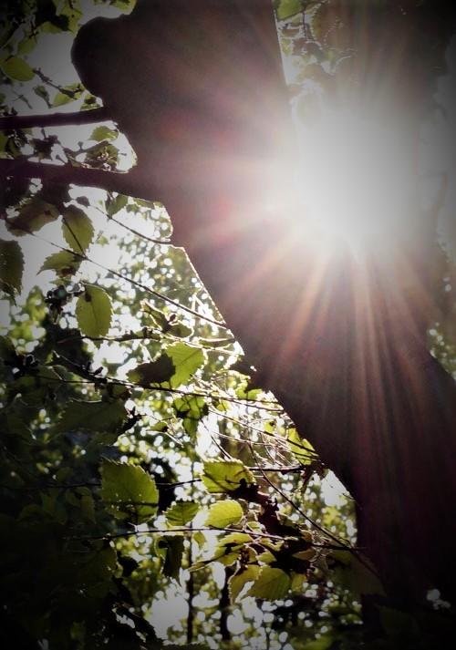 緑道公園_d0162994_08570649.jpg