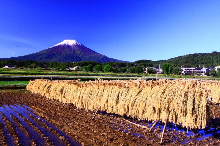 令和2年9月の富士 番外編 富士山初冠雪_e0344396_20395199.jpg